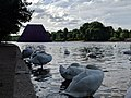 The Mastaba (Project for London, Hyde Park, Serpentine Lake), with swans, morning.jpg