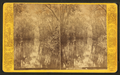 The Narrows, Oklawaha River, Fla, from Robert N. Dennis collection of stereoscopic views.png
