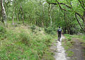 The Purbeck Way South of the Blue Pool - geograph.org.uk - 1523460.jpg