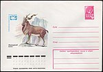 The Soviet Union 1979 Illustrated stamped envelope Lapkin 79-83(13333)face(The markhor).jpg