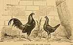 The book of the bantams - a brief treatise upon the mating, rearing and management of the different varieties of bantams (1886) (19775052893).jpg
