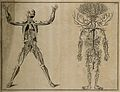 The course of the veins and the arteries through the body (T Wellcome V0007860.jpg
