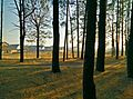The forest - panoramio (2).jpg