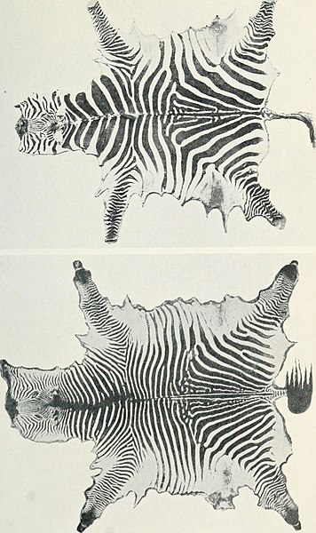 File:The horse and its relatives (1912) (14584362338).jpg