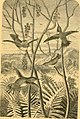 The naturalist in Vancouver Island and British Columbia (1866) (14763152895).jpg