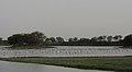 Thol Lake - Gujarat, India - Flickr - Emmanuel Dyan (15).jpg