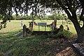 Thurber Cemetery (36595478882).jpg