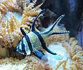 Tierpark Hellabrunn - fish 4.jpg