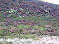 Tintwistle Low Moor - geograph.org.uk - 65531.jpg