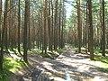 Tomsky District, Tomsk Oblast, Russia - panoramio (73).jpg