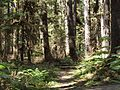 Tongass National Forest 536.jpg