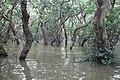 Tonle Sap Lake (9728444703).jpg