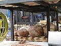 Trabajo paleontologico en el MEF 05.JPG