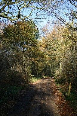 Track in Bradfield Woods - geograph.org.uk - 286629