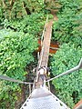 Trail bridge in the Tongass National Forest 2.jpg