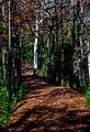 Trail of Autumn Leaves RCR-TR-4.jpg