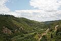 Transporte de Cereais em Torres Vedras, 2011.05.19.jpg