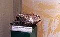 Transvaal Museum-008.jpg