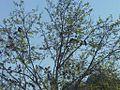 Tree full of birds.JPG