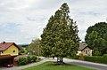 Tree in front of Filialkirche Brigida, Henndorf.jpg