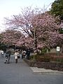Tree in front of Ueno Park.JPG