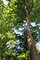 Tree trunk and moss (5946432444).jpg