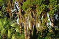 Trees - panoramio (46).jpg