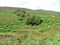 Trees and Moorland - geograph.org.uk - 217919.jpg