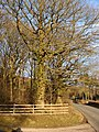 Trees at the entrance to the car park, Bigsweir Wood - geograph.org.uk - 1702517.jpg