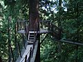 Treetop Adventure in Capilano Suspension Bridge Park.JPG