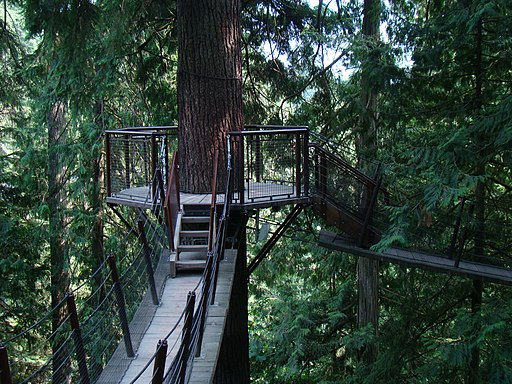 Treetop Adventure in Capilano Suspension Bridge Park