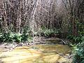 Trekking near water stream @ Wayanad wildlife Sanctuary - panoramio.jpg