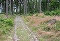 Tremsin, forest (2).jpg