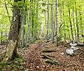 Triglav National Park - trail.jpg