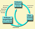 Tritium cycle.jpg