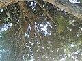 Trstenica09761.JPG