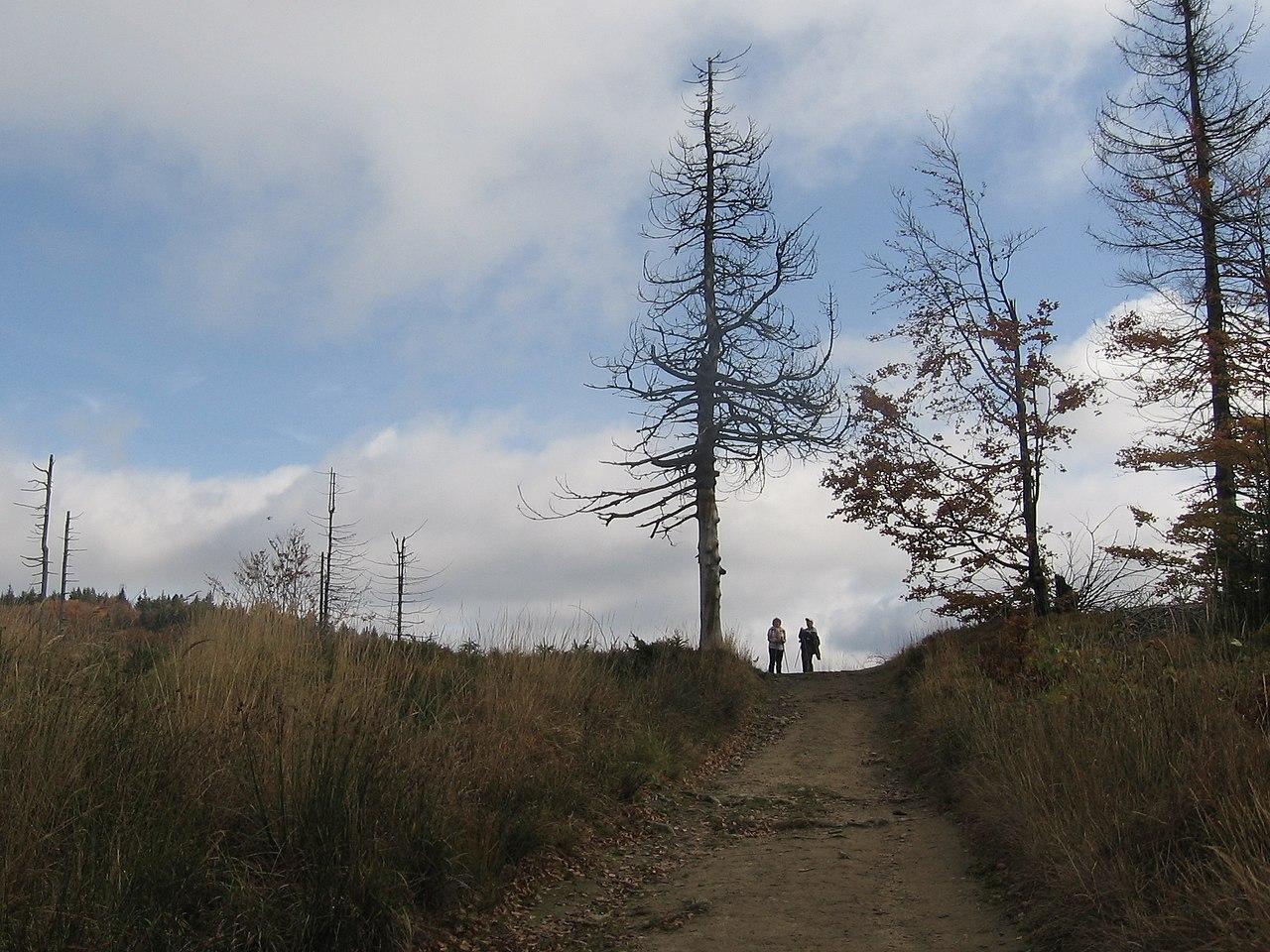 Szlak turystyczny – Hala Rysianka – Krawców Wierch