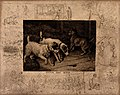 Two dogs stare attentively at a hole in the haybarn's floorb Wellcome V0020957.jpg