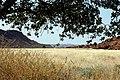 Twyfelfontein, Rock Engraving - panoramio - Frans-Banja Mulder (1).jpg