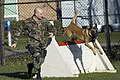 US Navy 060208-N-3390M-021 Master-at-Arms 2nd Class Mathew Tarlton, assigned to Military Working Dog Kennel Naval Station Everett and his partner, military working dog, Boy, conduct patrol drills.jpg