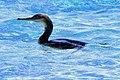 Uccellino sul Mare .jpg