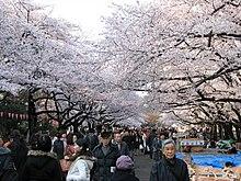 L'Hanami nel parco di Ueno a Tokyo.