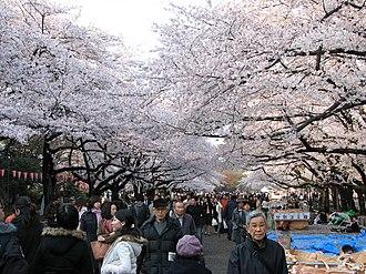 Ueno - Cherry blossom in Ueno Park
