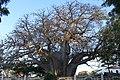 Upanga, Dar es Salaam, Tanzania - panoramio.jpg