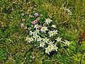 Val Maira, sentiero dei fiori (3).jpg