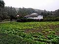 Vegetable garden (30179692773).jpg