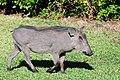 Victoria Falls 2012 05 24 1574 (7421896864).jpg
