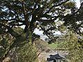 View from Chiriku Hachiman Shrine 2.jpg