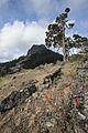Views from Cascade-Siskiyou National Monument (18364482281).jpg