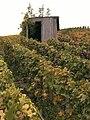 Vignes (Alentours de Festigny.51) Cl.J.Weber01 (23382009960).jpg